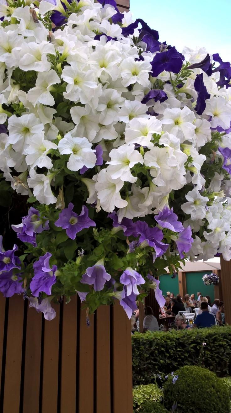 wimby flowers